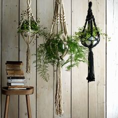 These hanging indoor planters are just the ticket for would-be urban gardeners.