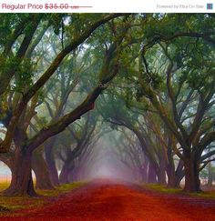 Tree Canopy - Evergreen Plantation is a Historic Site in Edgard. Plan your road trip to Tree Canopy - Evergreen Plantation in LA with Roadtrippers. Deck Canopy, Backyard Canopy, Canopy Bedroom, Garden Canopy, Metal Canopy, Tree Canopy, Canopy Outdoor, Canopy Crib, Beauty