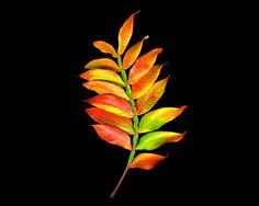 Fine Art Photography Botanical Art Leaf Study by PalmTrailPress, $30.00