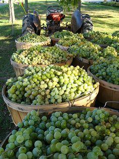 harvest time | by flutterbideas