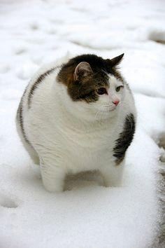 たぶん猫 | Sumally (サマリー)