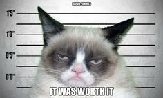 Funny pictures about Grumpy cat sings the 'soft kitty' song. Oh, and cool pics about Grumpy cat sings the 'soft kitty' song. Also, Grumpy cat sings the 'soft kitty' song. Gato Grumpy, Grumpy Cat Mug, Grumpy Cat Quotes, Grumpy Cat Humor, Grumpy Cat Valentines, Georg Christoph Lichtenberg, Funny Cats, Funny Animals, Funniest Animals