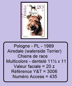 Timbre Pologne PL 1989 Chiens : Airedale ══════════════════════  Image ☞ http://wamiz.com/chiens/airedale-terrier-2   ══════════════════════ Série ☞   https://fr.pinterest.com/pin/121526889922634188/