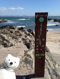 クマ散歩:岩礁のみちを風にも負けずクマは行く(間口) The Bear explores Miura Rock Reef!♪☆(^O^)/
