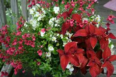 Colors Of The Garden: Contemplating Containers