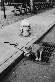 Jill Freedman Dogs