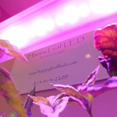 """Spring is on it's way, but why wait to start your garden? Head on over to our website (happyleafled.com, as shown in the photo). There's still time to use the code """"winter"""" and take 20% off of our V2 model. #happyleaf #hydroponics #indoorgardening #wintergarden #organicgardening #horticulture #organicfood #growlights #microgarden #LEDs #plantnursery #urbangardening"""