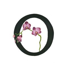Letter O for Orchid: A flower for each letter of the alphabet.