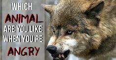 Welchem Tier ähnelst du, wenn du wütend bist?