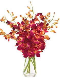 Pink Sizzle Orchids - starting at $59.95