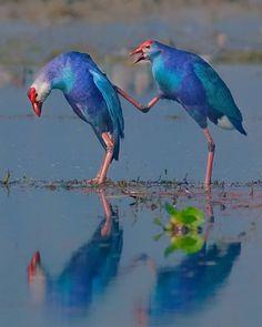 Canon Photography, Wildlife Photography, Animal Photography, Photography Photos, Lifestyle Photography, Love Birds, Beautiful Birds, Birds 2, Bird Gif