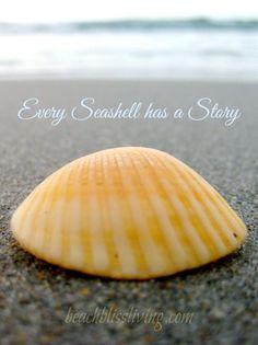 Seashell Quote