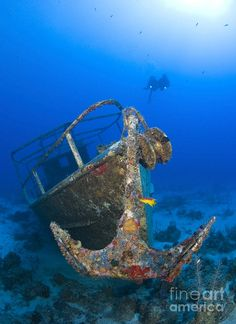 Divers Visit The Pelicano Shipwreck Photograph by Karen Doody