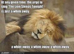 ohhhh lion king humor:)