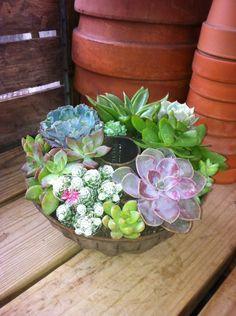Old Bundt Pan!  Cactus/Succulent