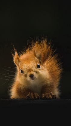 26 of the world's cutest animals # sweetest - Eichhörnchen♡ - Beauty Worlds Cutest Animals, Animals Of The World, Animals And Pets, Funny Animals, Wild Animals, Small Animals, Nature Animals, Cute Squirrel, Baby Squirrel