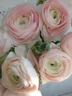 Peony alternatives for your wedding - Cloni Ranunculus