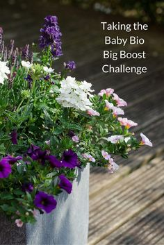 My experience of taking the Baby Bio Big Boost Challenge, using their Outdoor plant food to improve my plants' size, health and number of flowers.