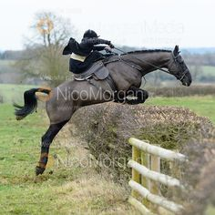 Sophie Walker jumping a hedge at Wilson's - The Cottesmore Hunt at Parva Lodge, Tuesday 5 December 2017 © 2017 Nico Morgan. All Rights Reserved on Nico Morgan Media, Oakham, Rutland, Equestrian & Commercial Photographer Horse Braiding, Horse Facts, Side Saddle, Fox Hunting, Show Jumping, Show Horses, Horseback Riding, Beautiful Horses, Animal Photography