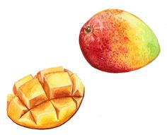 Mango, Commission by Alicia Severson Illustration and Design
