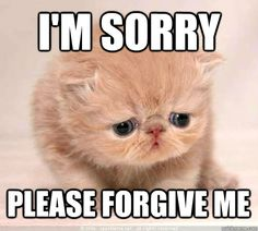 11 Purrfect I'm Sorry Memes - Random Funny Cat Im Sorry Meme, Sorry Quotes, I'm Sorry, Cute Memes, Funny Memes, Funny Sayings, Reaction Pictures, Funny Pictures, Cute Cats