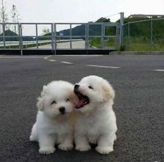 Any dogs and puppies that are cute. See more ideas about Cute Dogs, Cute puppies Tags: Baby Animals Super Cute, Super Cute Puppies, Cute Little Puppies, Cute Dogs And Puppies, Cute Funny Animals, Cute Little Animals, Adorable Puppies, Doggies, Puppies Puppies