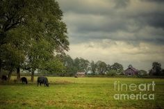 Out to Pasture by Belinda Greb