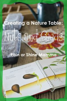Creating a Nature Table: Learning About Nuts and Seeds. Rain or Shine Mamma