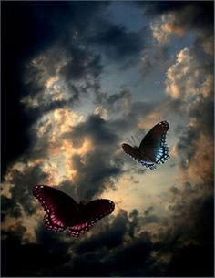 """Just like the butterfly, I too will awaken in my own time.""  ~Deborah Chaskin"