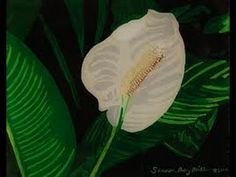 ▶ PEACE LILY - How To Care Indoor House Plant Spathiphyllum - Best Indoor Houseplant - YouTube