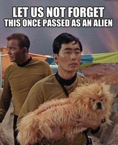 The Dogs of Star Trek: http://www.milesandemma .com/2013/05/the-dogs-of-star-trek.html