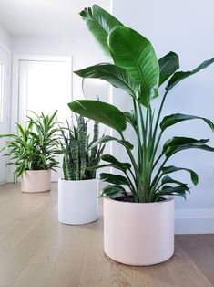 Big Potted Plants, Big Indoor Plants, Indoor Plant Pots, Outdoor Plants, Indoor Outdoor, Indoor Office Plants, Indoor Planters, Planter Pots, Palm Plants
