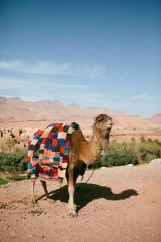 """Hit """"like"""" if you want to ride a camel in Morocco! #Africa #Morocco #travel"""