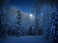 See a photo of snow-covered trees on an evening in Alaska, from National Geographic. National Geographic Photography, National Geographic Photos, Snow Covered Trees, Snow Trees, Winter Scenes, Beautiful World, Beautiful Places, Peaceful Places, Beautiful Scenery