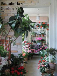 제라늄 키우기 방법 A to Z - <1> 계절별 관리 방법(여름철을 조심하라!) : 네이버 블로그 Plants, Flora, Plant, Planting