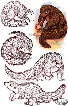 Pangolins by sharkie19 on DeviantArt