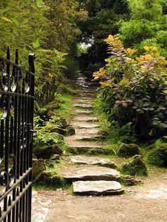 Camino en el jardín.