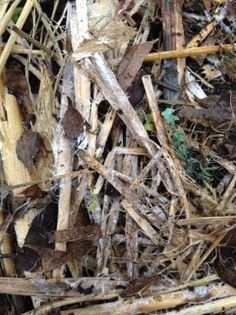 Creating Your Own Mycorrhiza