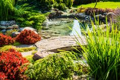 """Do you look at your neighbors yard and turn green with envy? Wish you could make your landscaping look half as good? Chances are you think to yourself """"I just don't have the money – or the time."""" But what if I told you there was a way to get that yard looking beautiful with …"""