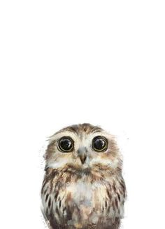 Little Owl by Amy Hamilton as image on canvas ✓ buy online now at JUNIQE … - Baby Animals Baby Owls, Cute Baby Animals, Baby Baby, Art Et Nature, Owl Illustration, Little Owl, Owl Art, Animals Beautiful, Watercolor Paintings
