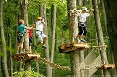 Days Out Ontario | Tree Top Trekking, Huntsville, Ontario