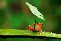 Look At This Chill Frog Using A Leaf As An Umbrella