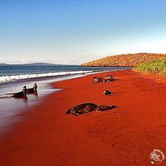 Red Sand Beach, la meravigliosa spiaggia rossa delle Galapagos Situata nel versante nord dell'isola di Rabida, deve il suo colore rosso mattone alle ceneri del vicino vulcano e alla corrosione delle sue pendici. Si tratta dell'unico approdo disponibile dell'isola, un habitat incontaminato e selvaggio popolato da numerose colonie di leoni marini #MyBestPlaceAroundTheWorld  #RedSandBeach #Red #Beach #Galapagos #RabidaIsland #IslaRabida #Equador #sealions #MyBestPlace #dovemipiace