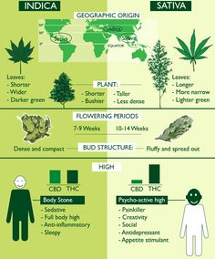 What Is Indica And What Is Sativa? Legalize Weed Everywhere and follow: pinterest.com/Predess