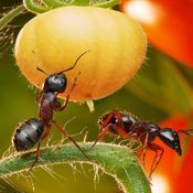 Pests Got You Down? Try Some Terrific Pest Management Tips - Pest Control Solutions Pest Control, Plants, Garden, Planting Vegetables, Vegetable Garden, Permaculture Design, Ants, Get Rid Of Ants, Nature