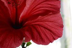 美しい花、それは生命の輝き