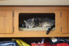 I'd give up a cabinet for the cat.