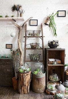 rustic plant display