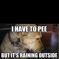 """totally my dog.  she'd be barking to go out, take one look outside at it raining and then look at me like """"i can wait"""""""