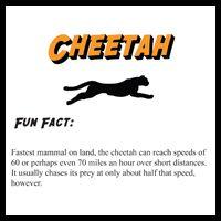 Wild Kratts Birthday - Animal Fun Facts - Cheetach, Gecko, Zebra, Kangaroo, Frog, Shark, Beaver and Snake.